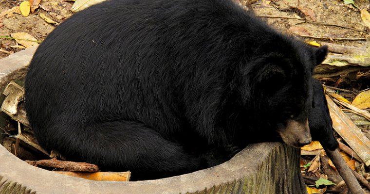 Sleeping like a bear