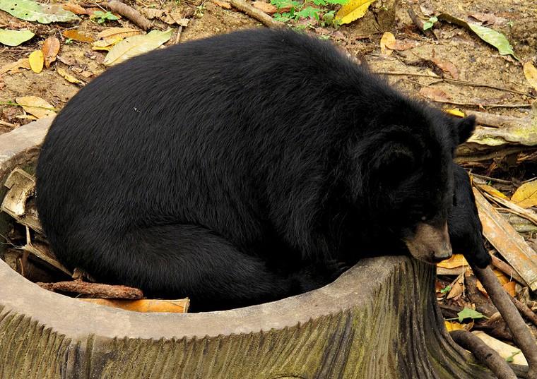 Sleeping like a bear - a bedtime talk with kids